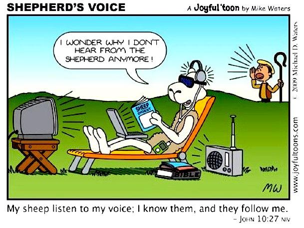 shephereds-voice